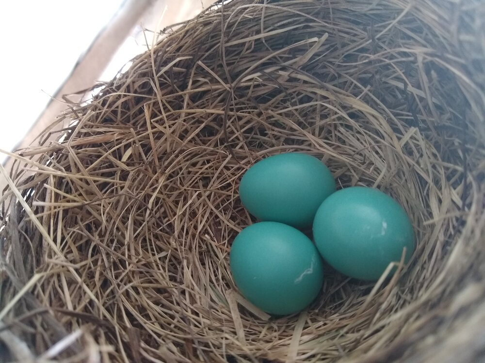 """I'm not counting them before they hatch… let's just call it """"a few""""."""
